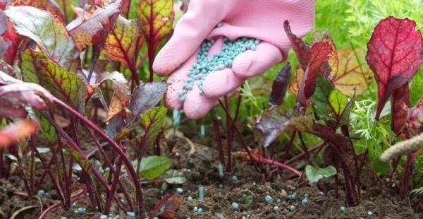 не забудьте удобрение для почвы