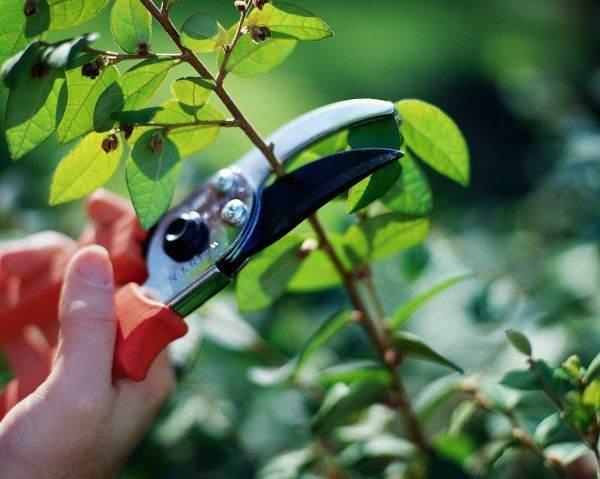 проверка растений на повреждения