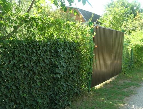 Как и чем закрыть ограждение из сетки рабицы декорирование забора (3)