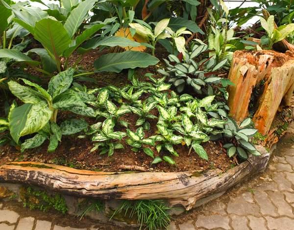 садовые бордюры из дерева
