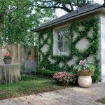 Вьющиеся растения для стен, беседок, навесов и заборов
