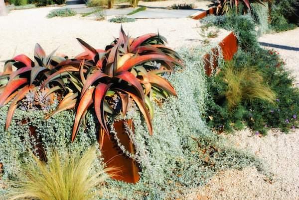 декоративный сад (8)