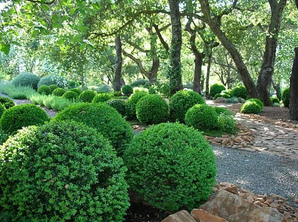Самшит в умиротворяющем саду