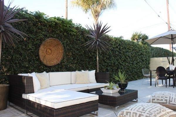 украшаем забор с помощью вьющихся растений