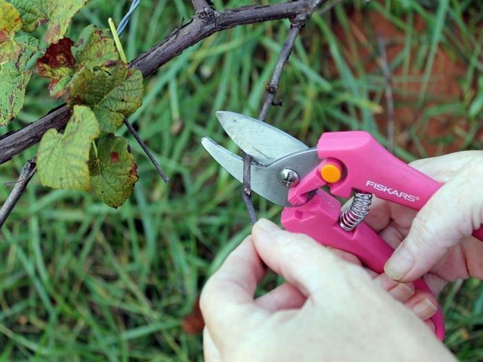 Обрезка веток винограда