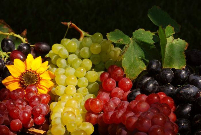 Выбор сорта винограда