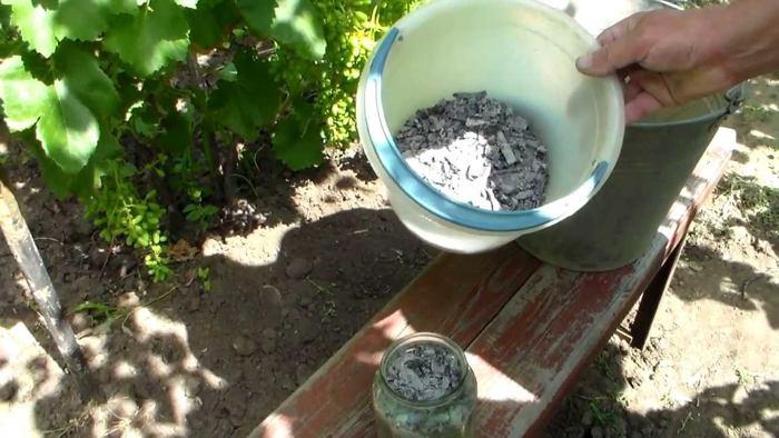 Подкормка винограда удобрениями