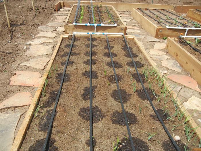 Капельный полив на садовом участке
