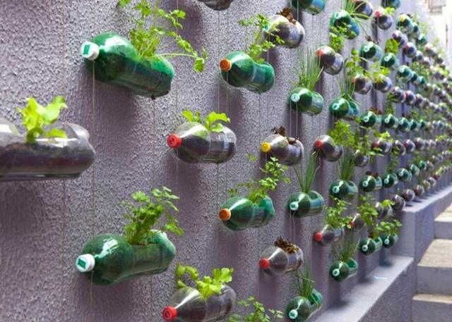 tsvety v plastikovykh butylkakh