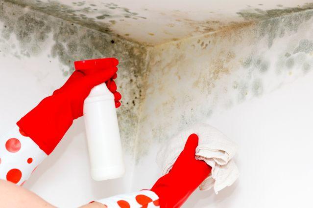 Obrabotka sten ot pleseni